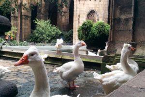 Oies dans le quartier gothique Barcelone.