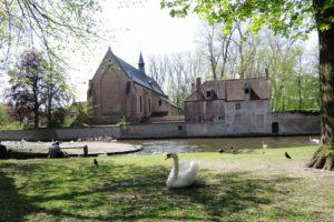 La place de la vigne (Wijngaardplein) et ses cygnes à Bruges