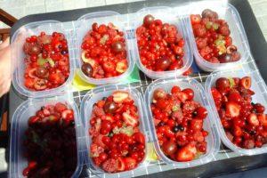 Mélange de fruits rouge du jardin mis en barquettes avant congéliation