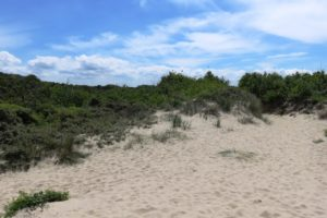 Dune du circuit de la dune Marchand à Zuydcoote