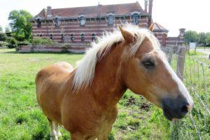 Cheval devant la ferme Nord à Zuydcoote