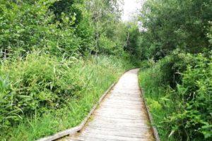Balade au sein de la réserve naturelle régionale du marais de Condette